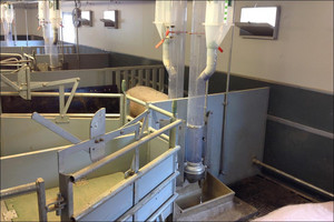 Combi Feeder for sows